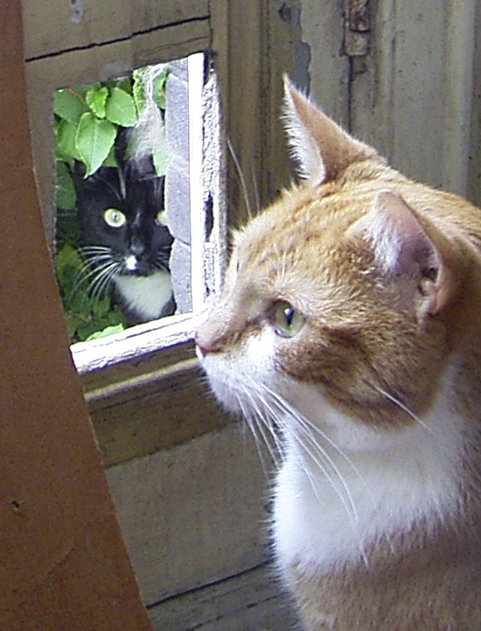 katten bij luik